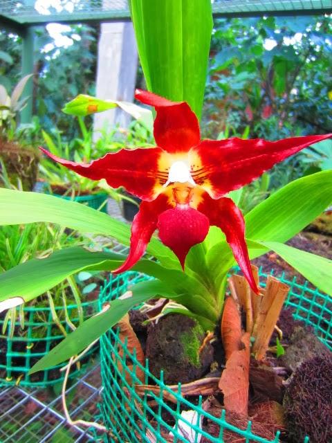 flower Mindo